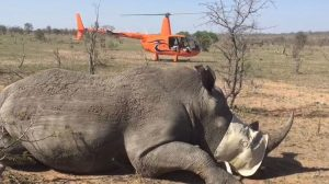 more Rhino Work in our R44